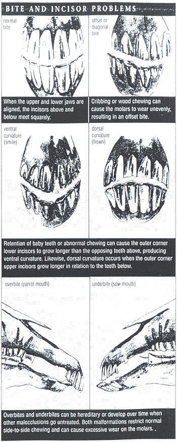 Billboard describing Bite & Incisor Problems in Equine Dentistry