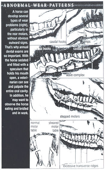 Poster describing Abnormal Wear Patterns in Equine Dentistry