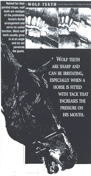 Poster of Wolf Teeth